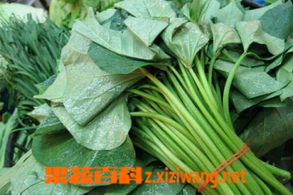 果蔬百科红薯叶